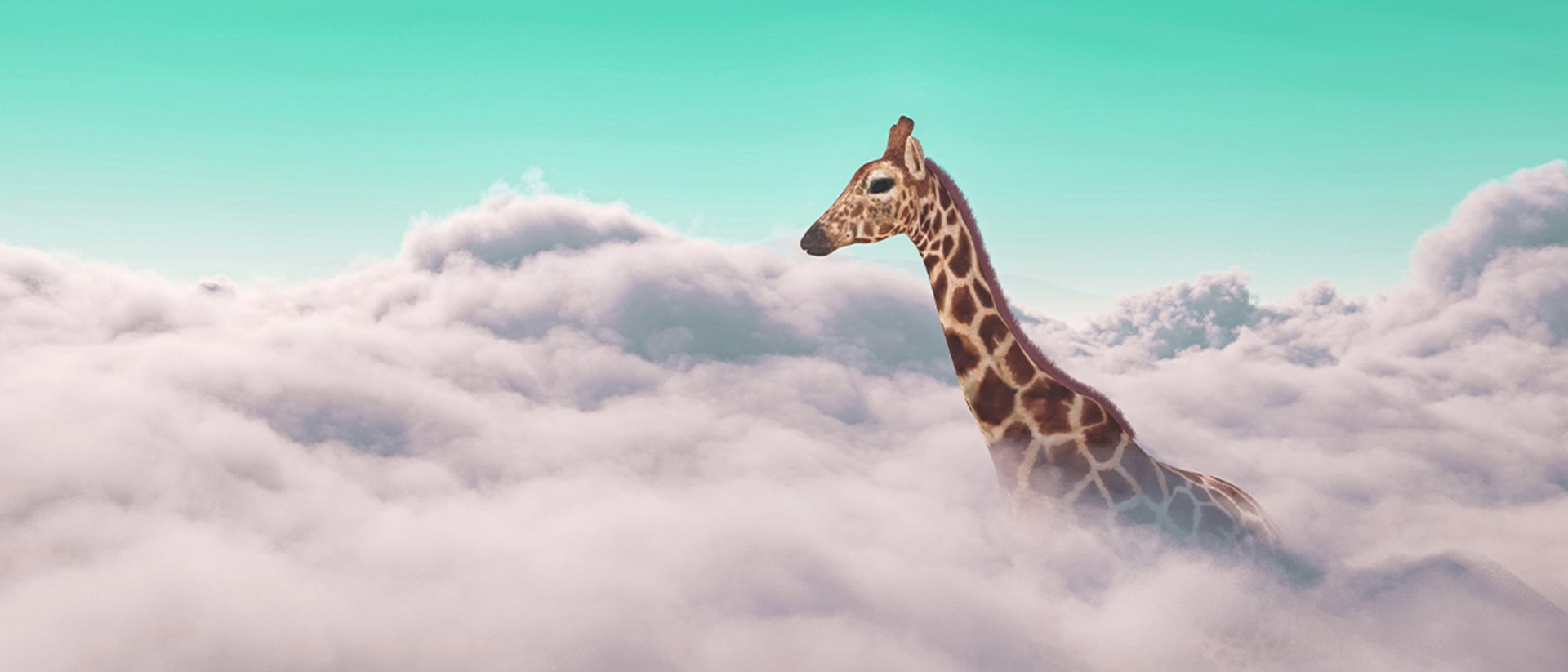 Image of a giraffe poking up through clouds with a teal sky
