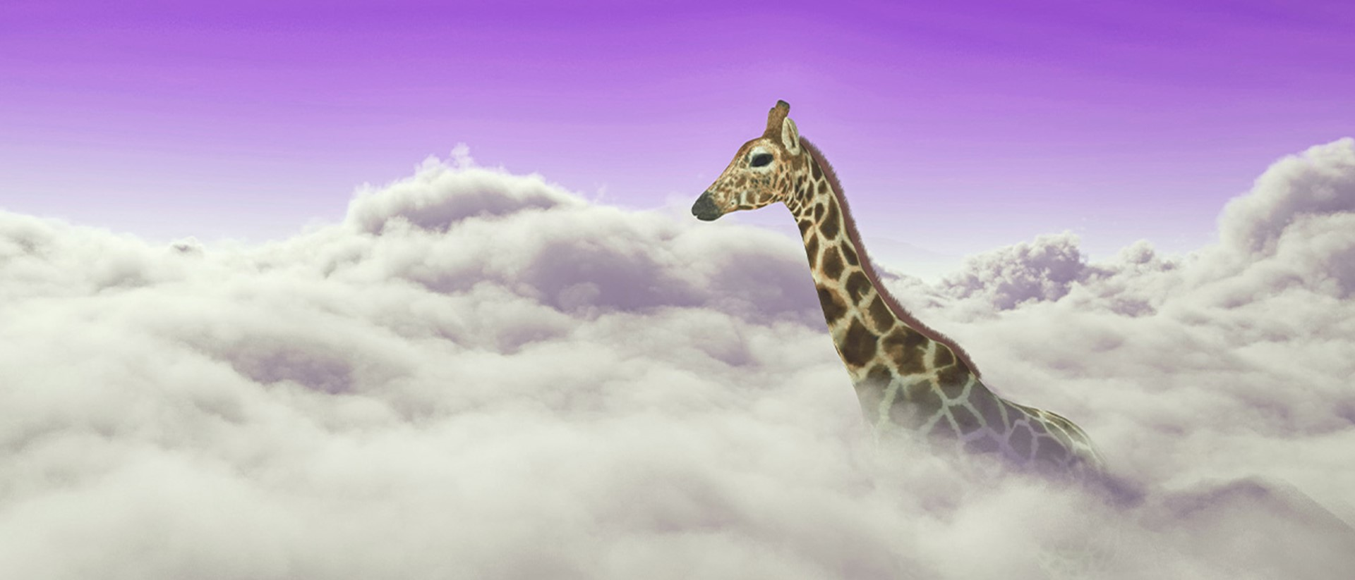 Image of a giraffe poking up through clouds with a purple sky